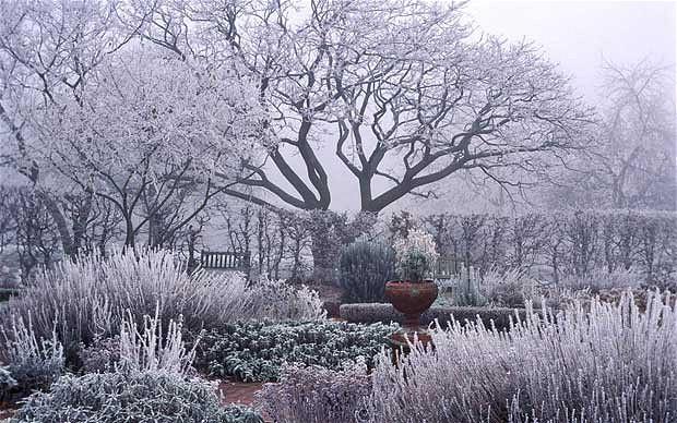 Come proteggere il giardino dal freddo dell'inverno