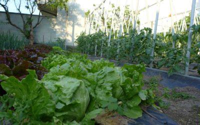 Cosa piantare a settembre o ottobre nell'orto