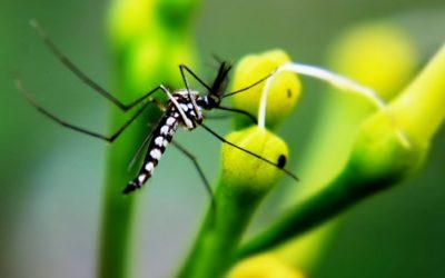 Liberi da zanzare